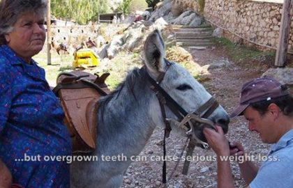 The Equine Programme Team on outreach in Hydra 2018